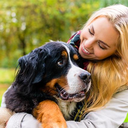 neolysplus chien photobiomodulation