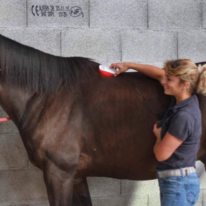osteo_cheval_photobiomodulation