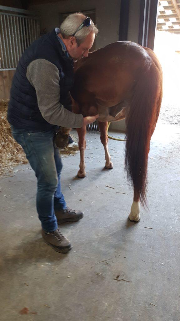 osteopathie-equine